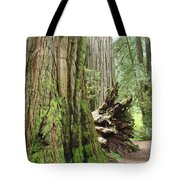 Big California Redwood Tree Forest Art Prints Tote Bag