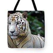 Big Cats 2 Tote Bag