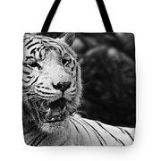 Big Cats 3 Tote Bag