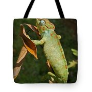 big chameleon of Madagascar 20 Tote Bag