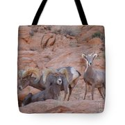 Big Horn Group Pose Tote Bag