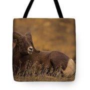 Big Horn Ram   #4452 Tote Bag