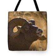 Big Horn Ram   #4856 Tote Bag