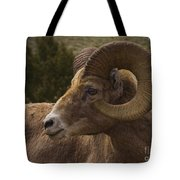 Big Horn Ram   #5098 Tote Bag