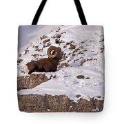 Big Horn Ram   #7036 Tote Bag