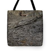 Big Horn Ram   #9264 Tote Bag