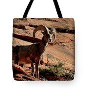 Big Horn Ram At Zion Tote Bag