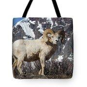 Big Horn Ram In Spring Tote Bag