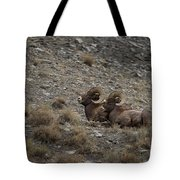 Big Horn Rams   #9157 Tote Bag