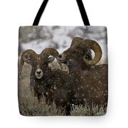 Big Horn Rams In The Snow   #2493 Tote Bag
