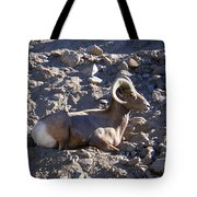 Big Horn Sheep Close Up Tote Bag