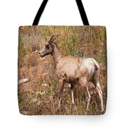 Big Horn Sheep Ewe Tote Bag