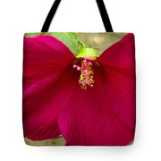 Big Red Hibiscus Bloom Tote Bag