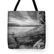 Big Roots Time Traces Tote Bag