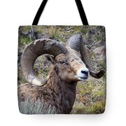 Bighorn Battle Scars Tote Bag