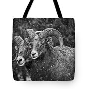 Bighorn Brothers In Grey Colorized Tote Bag