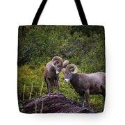 Bighorn Ram 4 Tote Bag