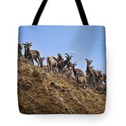 Bighorn Sheep At Blue Mesa Reservoir Tote Bag