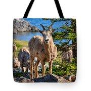 Bighorn Sheep Of Lake Minnewanka Tote Bag