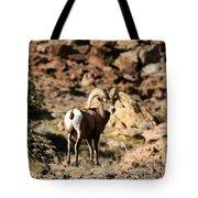 Bighorn Stare Tote Bag