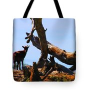 Billy The Goat Tote Bag