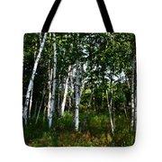 Birch Grove In The Sunlight Tote Bag