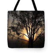 Birch In Silhouette Tote Bag
