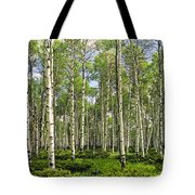 Birch Tree Grove In Summer Tote Bag