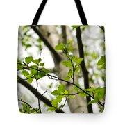 Birch Tree In Spring Tote Bag