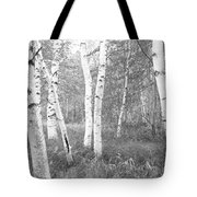 Birch Trees In A Forest, Acadia Tote Bag