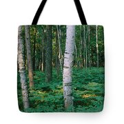 Birch Trees In A Forest Tote Bag