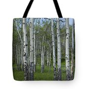 Birch Trees In A Grove No. 0148 Tote Bag