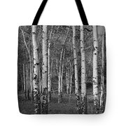 Birch Trees No.0148 Tote Bag