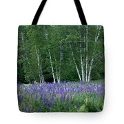 Birches In The Blue Lupine Tote Bag