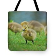 Bird - Baby Goose -leader Of The Pack Tote Bag