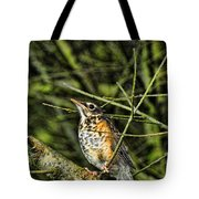 Bird - Baby Robin Tote Bag by Paul Ward