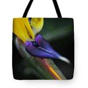 Bird Of Paradise Tote Bag