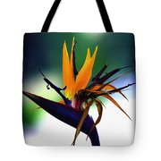 Bird Of Paradise Flower - Square Tote Bag