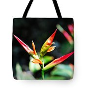 Bird Of Paradise Plant Tote Bag