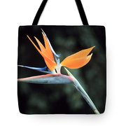 Bird Of Paridise Tote Bag