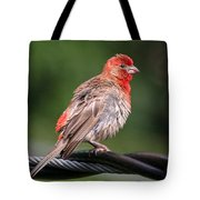 High Wire Act Tote Bag