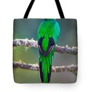 Bird Perching On A Branch, Savegre Tote Bag