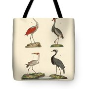 Birds From Hot Countries Tote Bag
