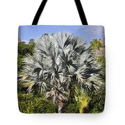 Bismarck Palm  Bismarckia Nobilis Tote Bag