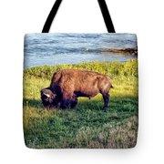 Bison 4 Tote Bag