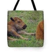 Bison Calves  Tote Bag