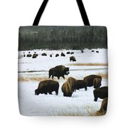 Bison Cows Browsing Tote Bag