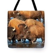 Bison Family In The Lamar River In Yellowstone National Park Tote Bag