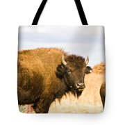 Bison On Tall Grass Iv Tote Bag