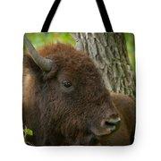 Bison Resting Tote Bag